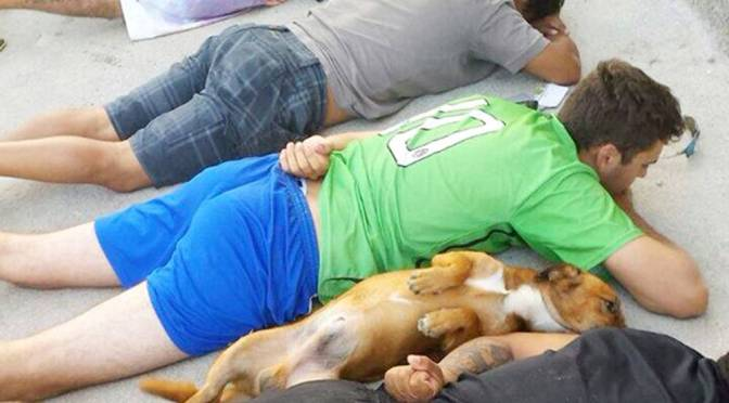 Picture of guard dog laying down with owner after police raid goes viral