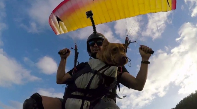 Meet Sofie…The SpeedFlying Pit From Hawaii
