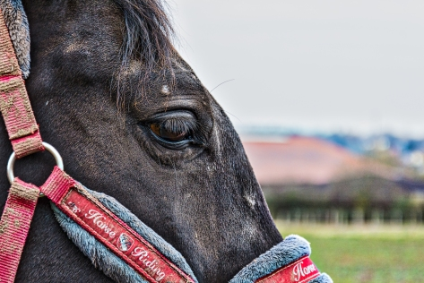 Horse Riding Horse